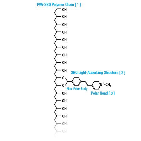 specialist_diagram1