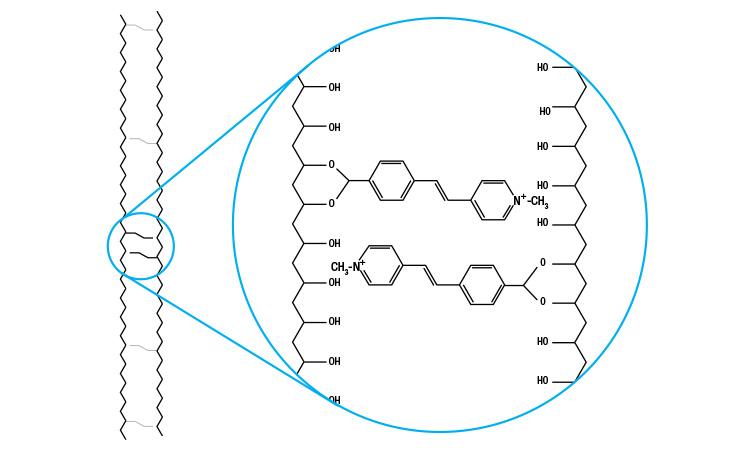 specialist_diagram2