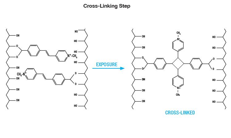 specialist_diagram3